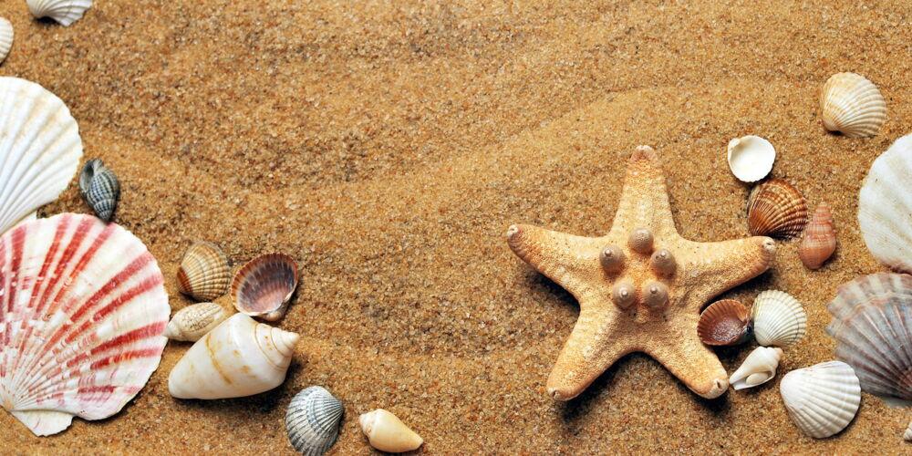 shells_croisy.jpg
