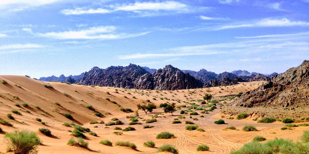 Arabia_rabah-al-shammary.jpg