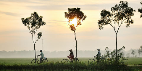 bicycle-riders-in-rice-fields-at-sunrise.jpg