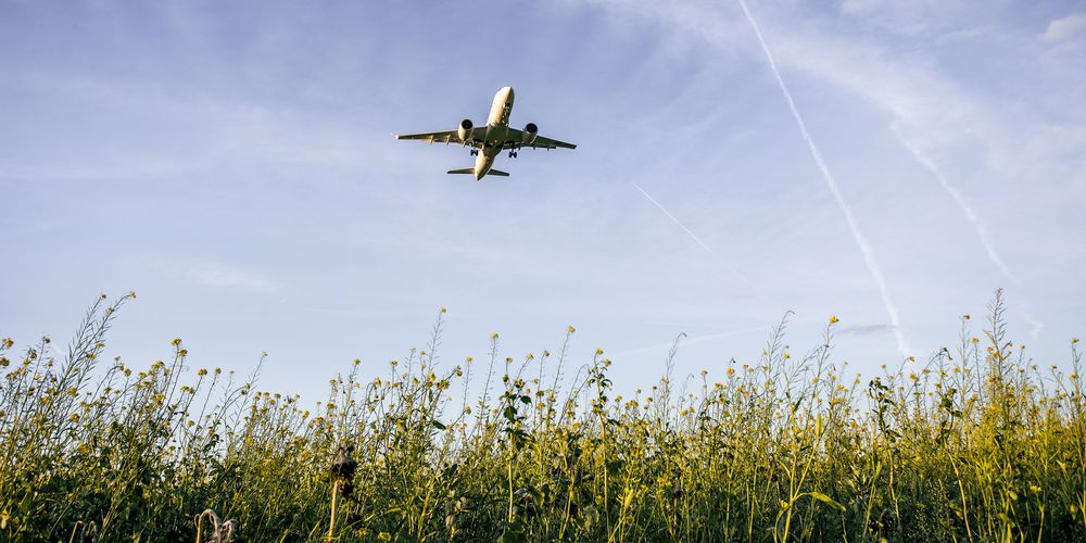 Airplane_ZRH_Flowers.jpg