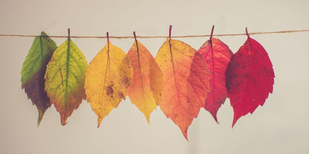 chris_lawton_Autumn.jpg