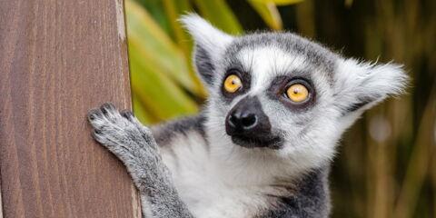Madagaskar_3.jpg