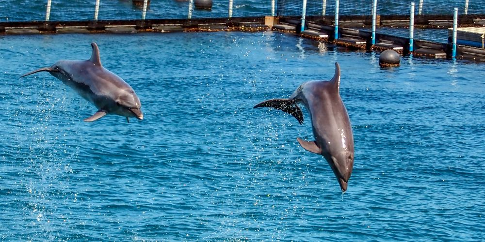 Dolphins_christopher-laberinto.jpg