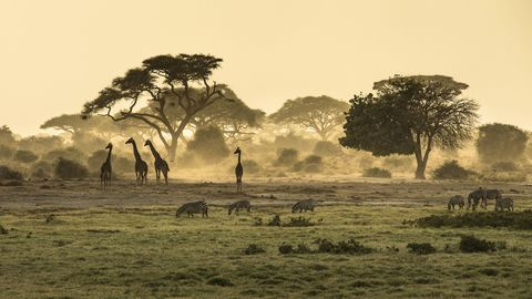 Fotolia_Afrika_Safari2.jpg