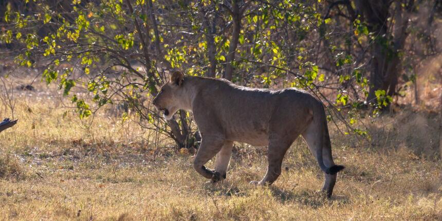 Fotolia_Okavango2.jpg