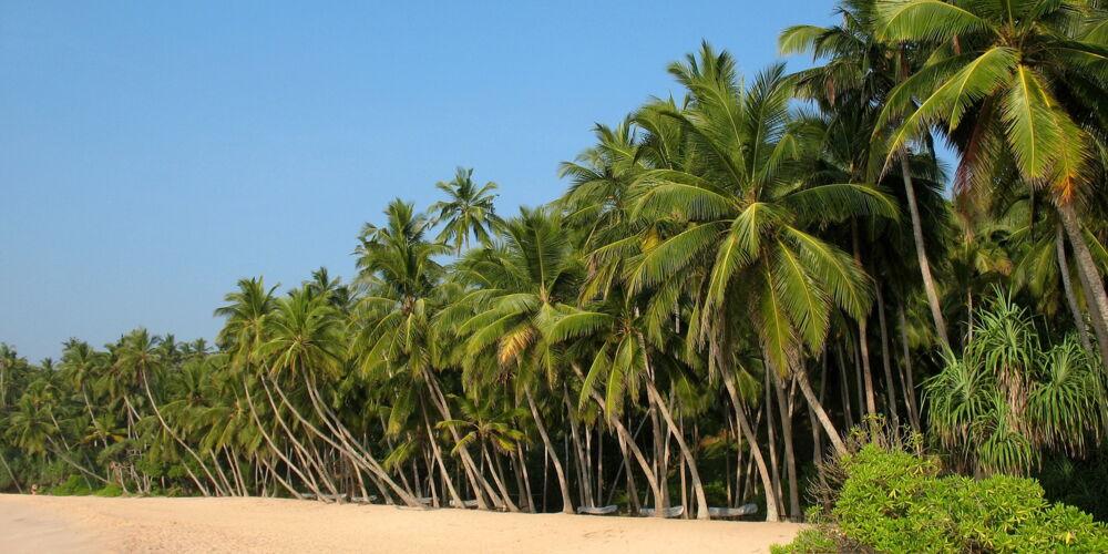 SriLanka_arvis_za.jpg
