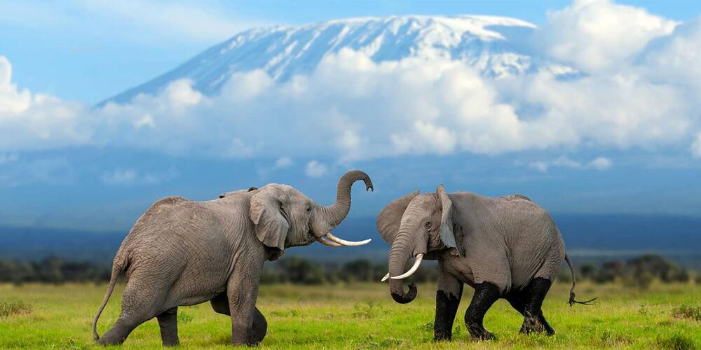 Kilimanjaro_EDW.jpg