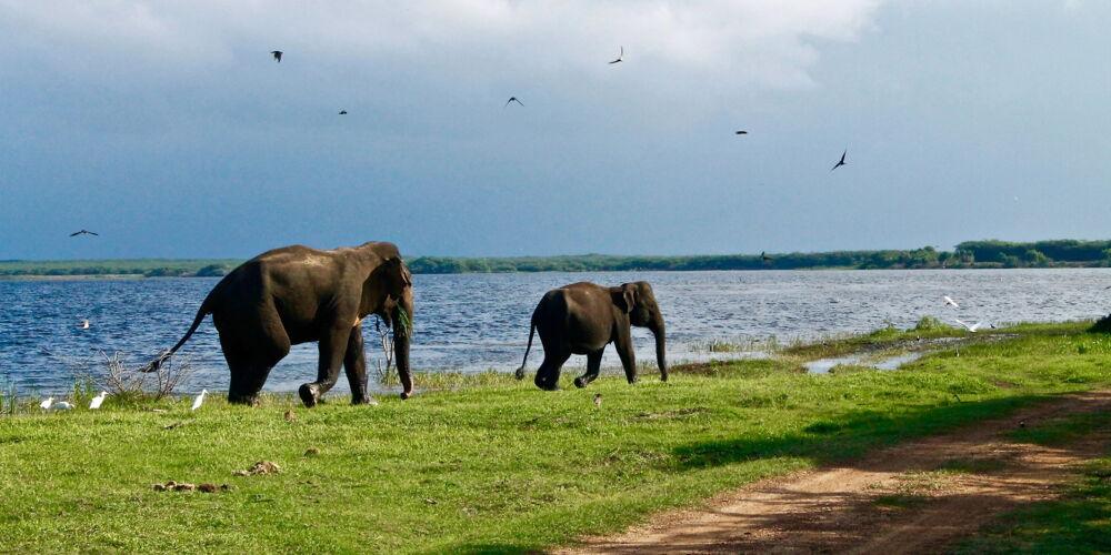 SriLanka_roxanne-desgagnes.jpg