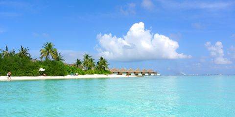 maldives-coconut-tree-sea-resort-summer-holiday-3.jpg