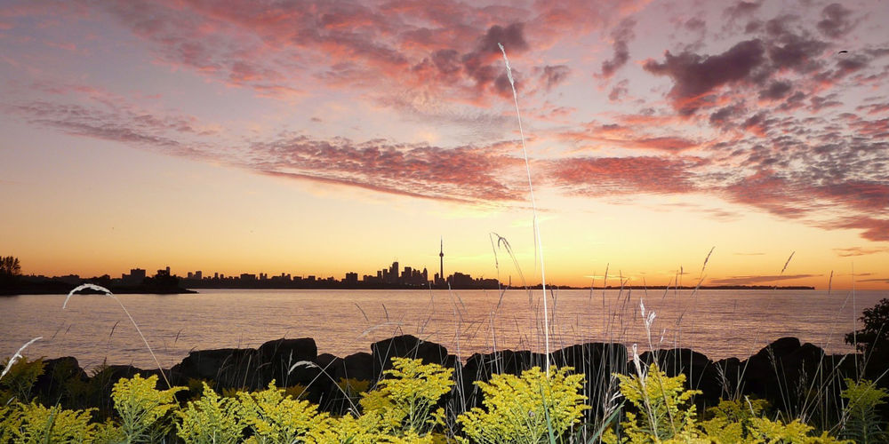 toronto-lake-ontario-skyline-sunrise-plants.jpg