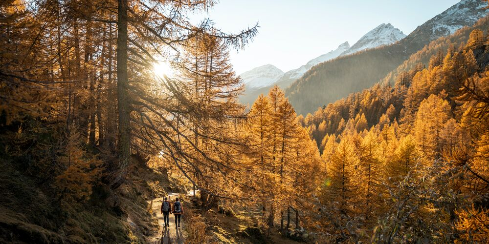 Herbst_Laubblätter_ST.jpg