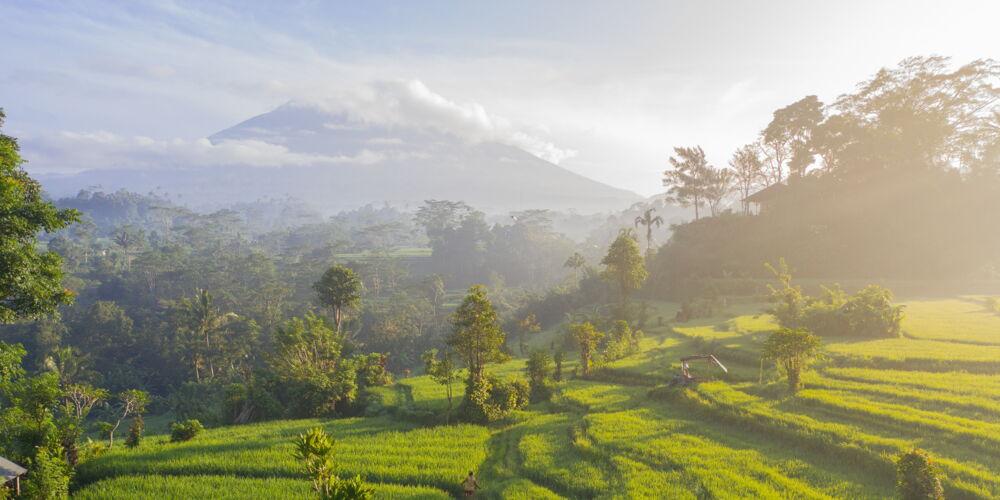 Bali_geio-tischler.jpg