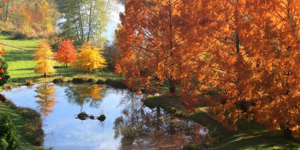 arboretum_2000.jpg