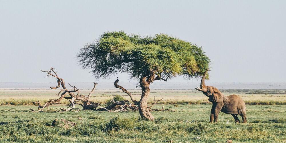 Afrika1_Bild von Harshil Gudka.jpg