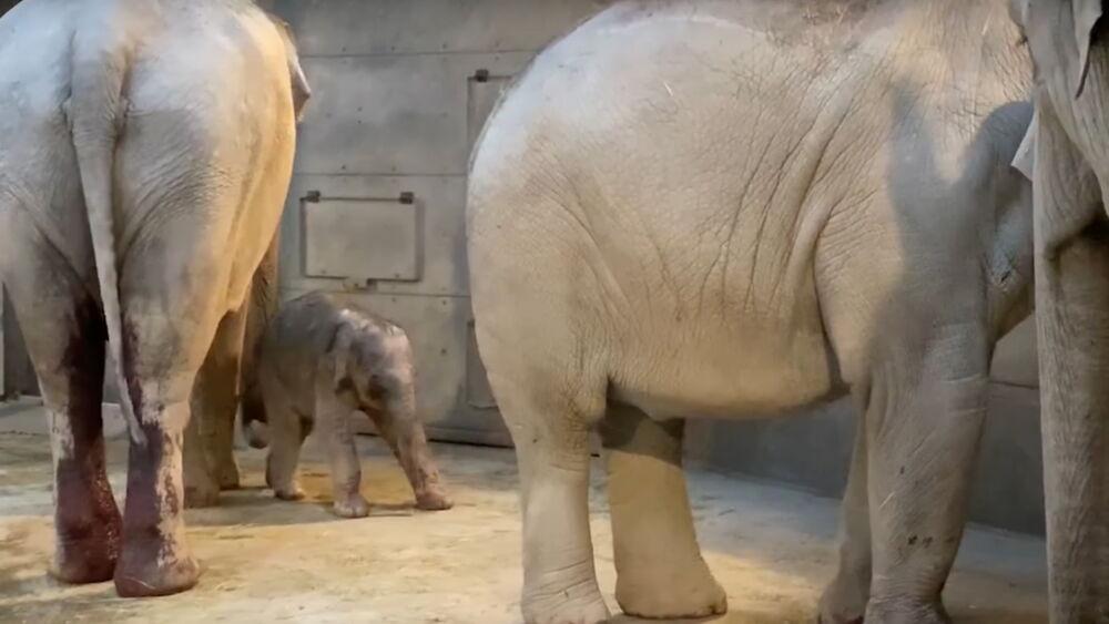 Elefantenbaby_Zürizoo.jpg